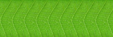 horizontal green leaf texture for pattern and background Royalty Free Stock Image