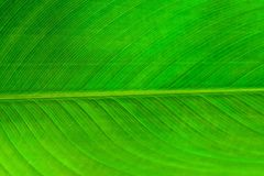 The Horizontal of Green Leaf Textured Background Royalty Free Stock Images