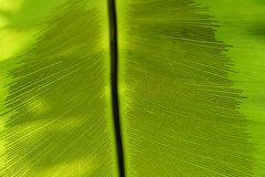 The Horizontal of Green Leaf Textured Background Stock Image