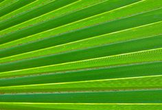 The Horizontal of Green Palm Leaf Textured Background Stock Image