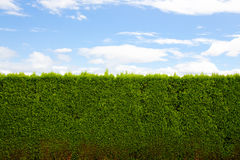 Horizontal Hedge Stock Photography
