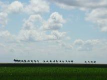 Horizontal hollandais Image stock