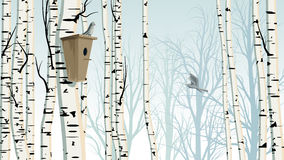 Horizontal illustration of birch trunks forest with birdhouse. Royalty Free Stock Image