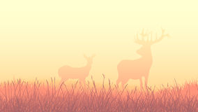 Horizontal illustration of deers in morning field. Stock Images