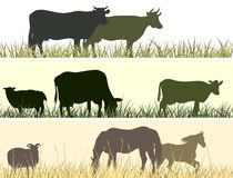 Horizontal illustration of farm pets. Stock Photos
