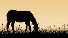 Horizontal illustration of horse grazing. Stock Photos