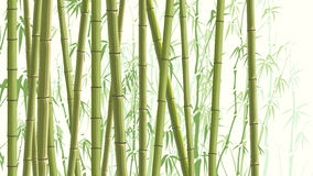 Horizontal illustration with many bamboos. Royalty Free Stock Image