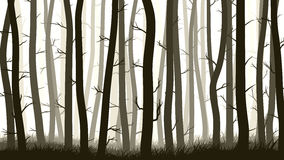 Horizontal illustration with many pine trees. Stock Images