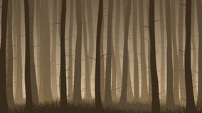 Horizontal illustration of misty coniferous forest. Stock Image