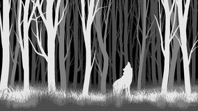 Horizontal illustration of night forest with wolf. Royalty Free Stock Image