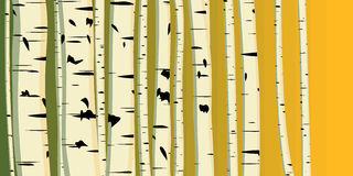Horizontal illustration of trunks birches. Royalty Free Stock Photos