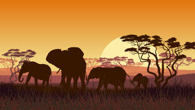 Horizontal illustration of wild animals in African sunset savann. Horizontal vector illustration of wild elephants in African sunset savanna with trees Royalty Free Stock Image