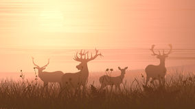 Horizontal illustration of wild animals on meadow. Royalty Free Stock Image