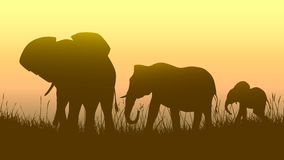 Horizontal illustration of wild animals in sunset savanna. Horizontal vector illustration family of elephants in African sunset savanna Stock Photo
