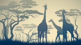 Horizontal illustration of wild giraffes in African savanna. Horizontal vector illustration of wild giraffes in African savanna with trees vector illustration