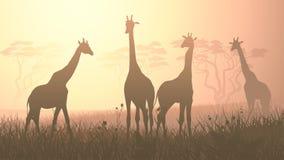 Horizontal illustration of wild giraffes in African savanna. Stock Photography