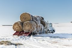 Big semi truck with hay bales on flatbed in winter. Horizontal image of a big transport truck with round hay bales stacked on the flatbed waiting to be moved on royalty free stock photo