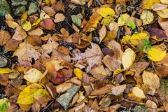 Fall Foliage on the Forest Floor Stock Photo
