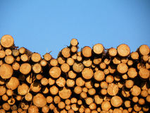 Horizontal image of cut log pile illuminated by the evening sunset against a blue sky Stock Photo