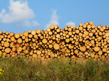 Horizontal image of cut log pile, sky and grass illuminated by the evening sunset. Stock Images