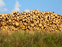 Horizontal image of cut log pile uneven top, illuminated by the evening sunset. Stock Photography