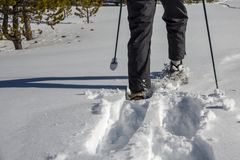 Snowshoes making fresh tracks in white snow Royalty Free Stock Image