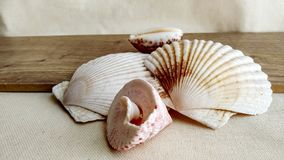 Seashells on the wooden background Royalty Free Stock Photography