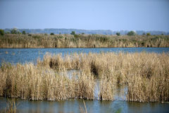 Horizontal image of wetlands with reeds on either side of the frame Stock Images