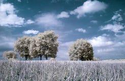 Horizontal infrarouge Photographie stock libre de droits