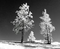 Horizontal infrarouge Photo libre de droits