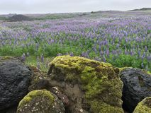 Horizontal islandais Images stock