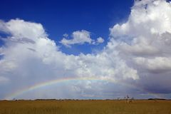 A full rainbow over Everglades National Park, FL. A horizontal or landscape image of a full rainbow in a cloud filled sky over Everglades National Park, Florida Royalty Free Stock Photography