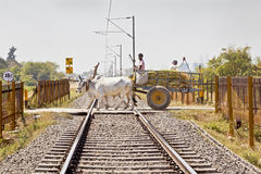 Bullock cart over open level crossing Stock Images