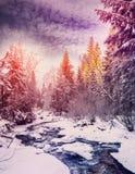 Horizontal merveilleux de l'hiver la neige a couvert le pin au-dessus de la rivière de montagne sous la lumière du soleil photos libres de droits