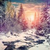 Horizontal merveilleux de l'hiver la neige a couvert le pin au-dessus de la rivière de montagne sous la lumière du soleil images libres de droits