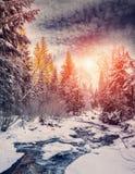 Horizontal merveilleux de l'hiver la neige a couvert le pin au-dessus de la rivière de montagne sous la lumière du soleil photographie stock