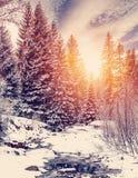 Horizontal merveilleux de l'hiver la neige a couvert le pin au-dessus de la rivière de montagne sous la lumière du soleil image libre de droits