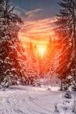 Horizontal merveilleux de l'hiver la neige a couvert le pin au-dessus de la rivière de montagne sous la lumière du soleil image stock