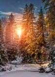 Horizontal merveilleux de l'hiver la neige a couvert le pin au-dessus de la rivière de montagne sous la lumière du soleil photos stock