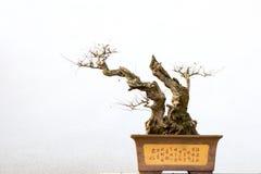 Horizontal mis en pot chinois Photo stock