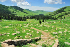 Horizontal mongol Image libre de droits