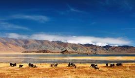 Horizontal mongol Photographie stock