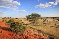 Horizontal namibien Image libre de droits