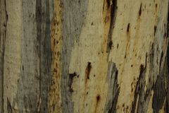 Horizontal natural wooden background. Fragment of the surface of a thick willow tree trunk royalty free stock photo
