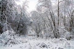 Horizontal neigeux d'arbres de l'hiver Images libres de droits