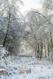 Horizontal neigeux d'arbres de l'hiver Image libre de droits