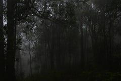 Horizontal normal Forêt foncée avec le regain Photographie stock