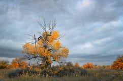 Horizontal nuageux d'automne photo stock