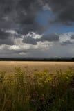 Horizontal orageux d'été images libres de droits