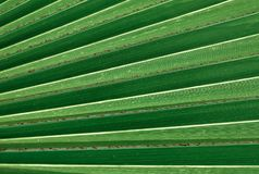 The Horizontal of Palm Leaf Background Pattern Stock Photo